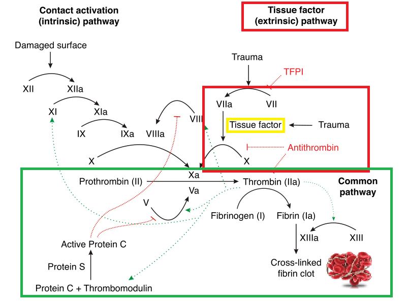 thromboplastin