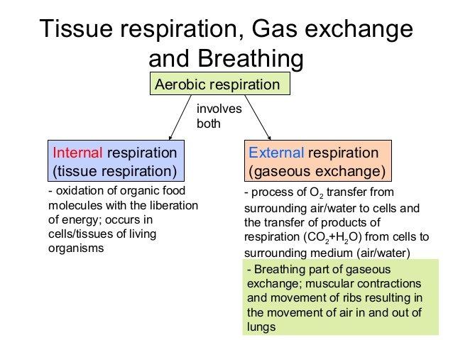 tissue respiration