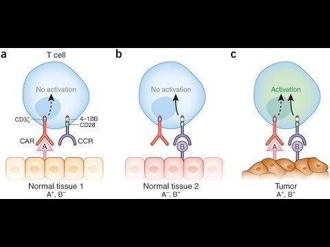 tissue-specific antigen