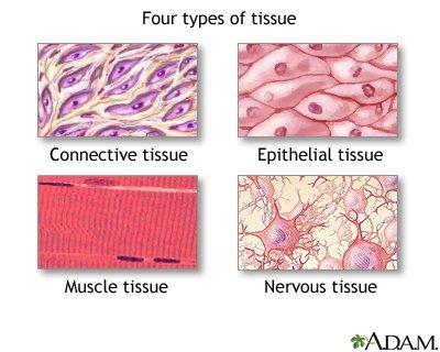 tissue type