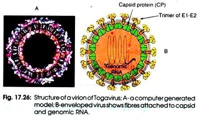 togavirus