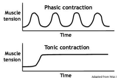 tonic contraction