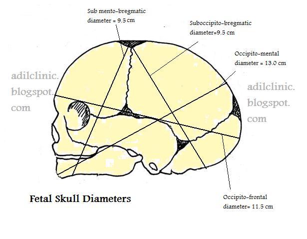 trachelobregmatic diameter