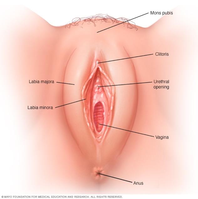 vaginodynia