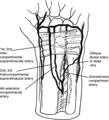 vascularized graft