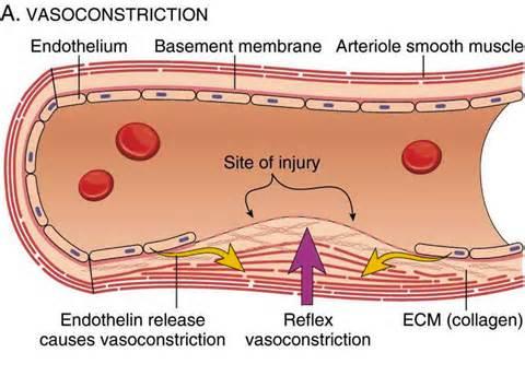 vasoconstrictive