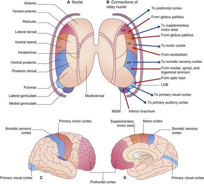 ventral thalamic peduncle