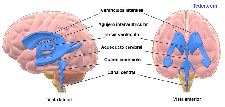 ventriculo-