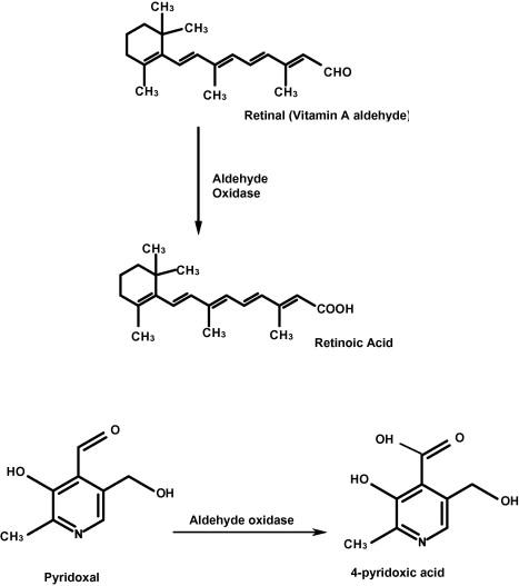 vitamin a aldehyde