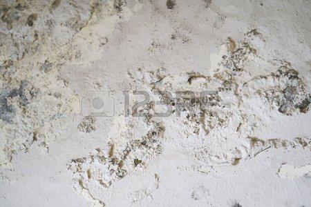 white damp