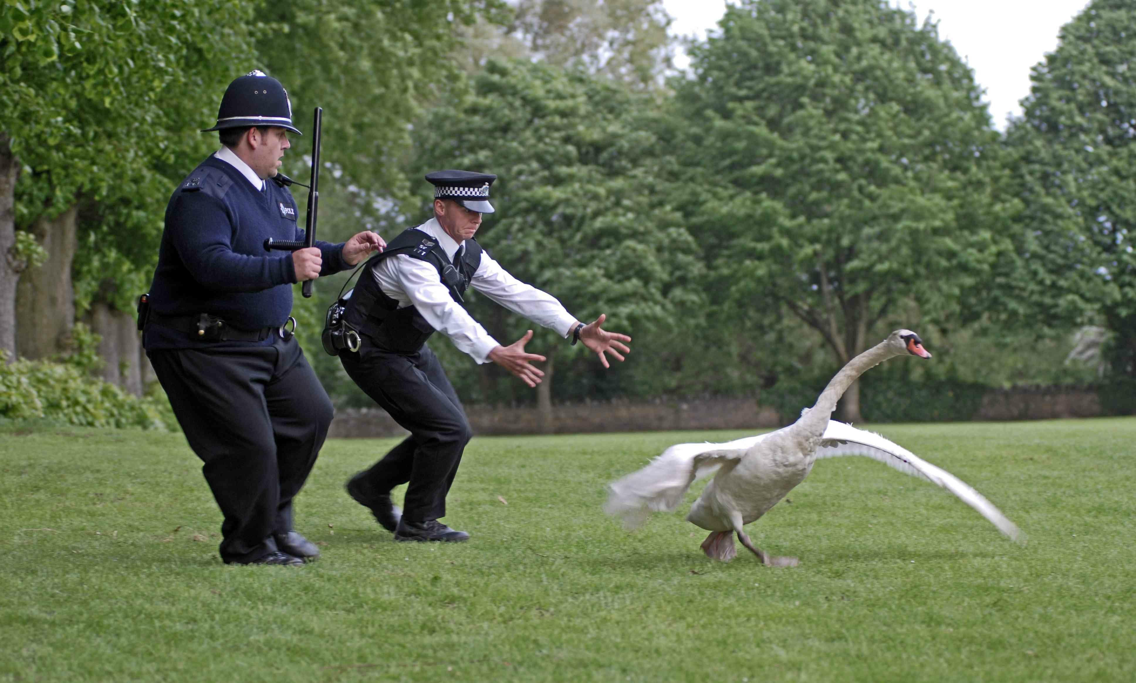 wild-goose chase