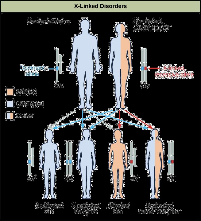 X-linked gene