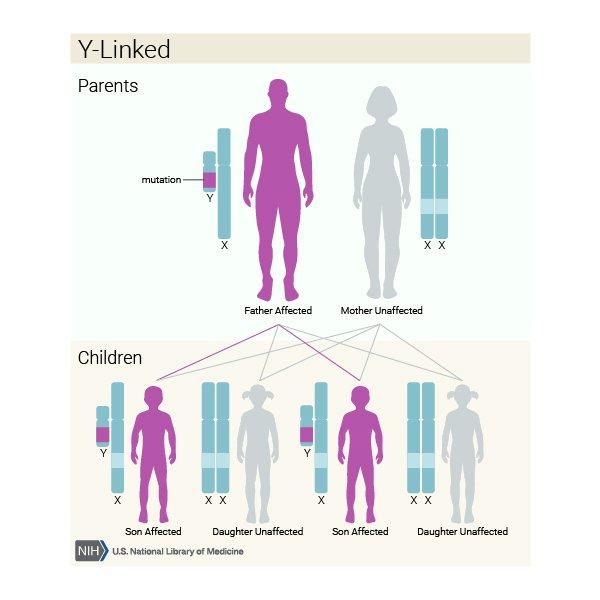 y-linked gene