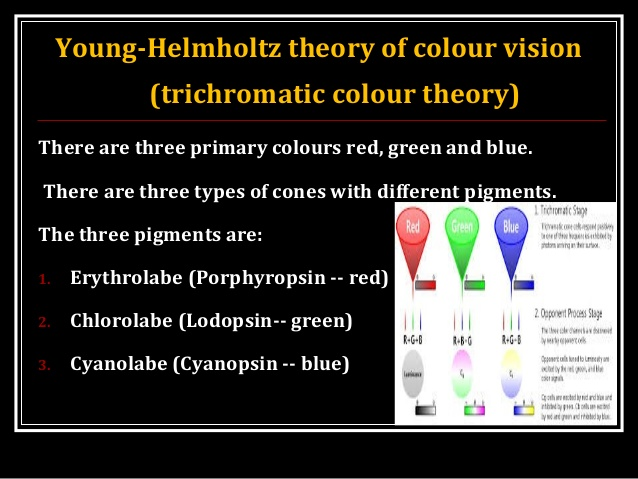 young-helmholtz theory of color vision