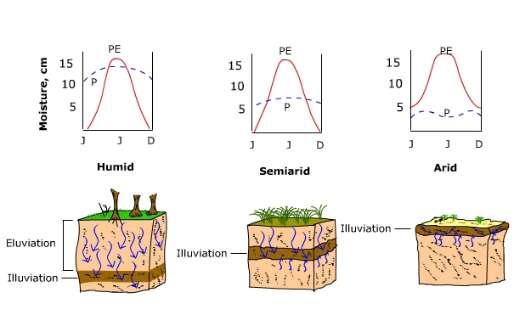 zone of illuviation