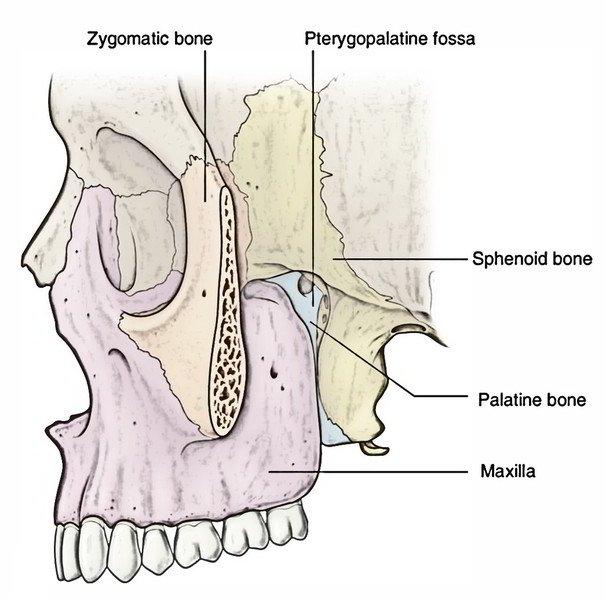 zygomatic fossa
