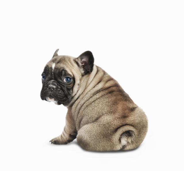 bottom dog