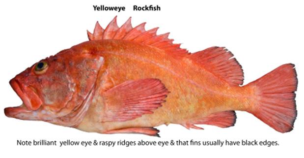 bottom-fish