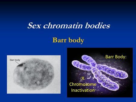chromatin body