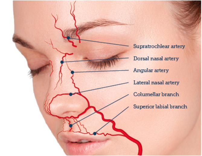 dorsal artery of nose