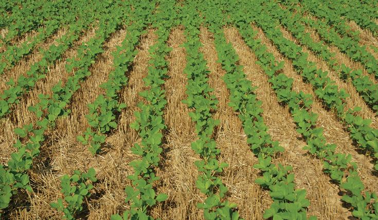double-crop