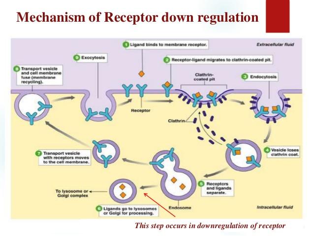 downregulation