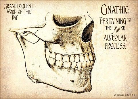 gnathic