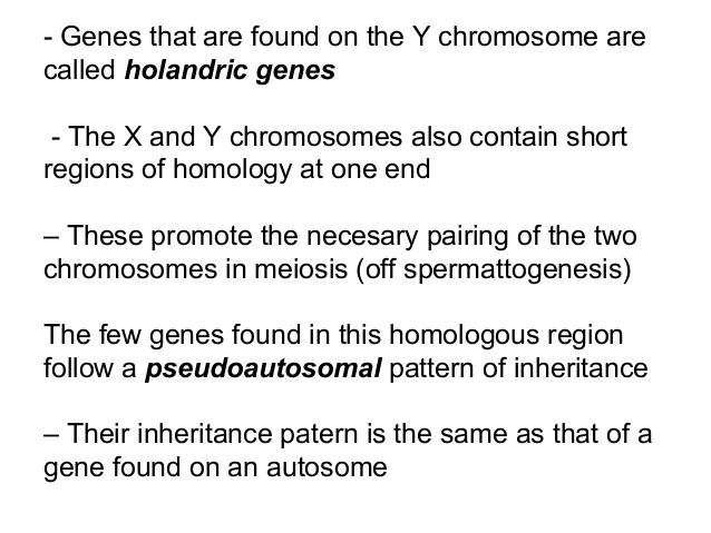 holandric gene