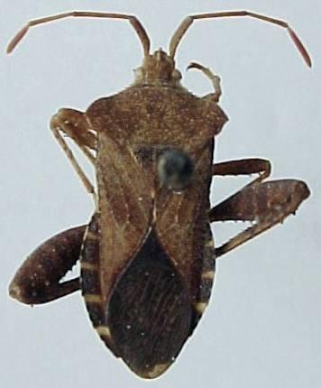 Mamurius