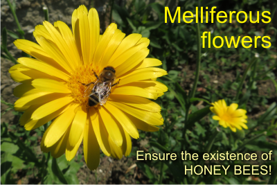 melliferous
