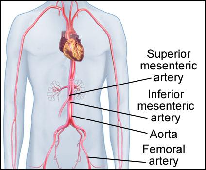 mesenteric artery
