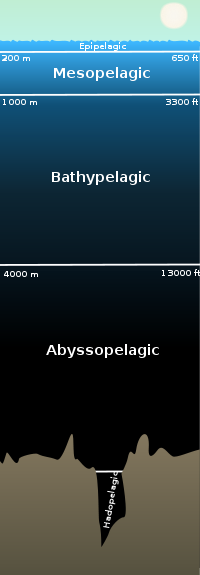 mesopelagic zone