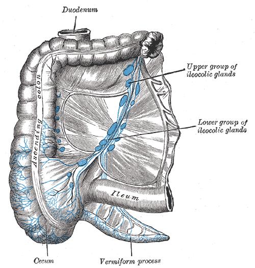 mesosigmoid
