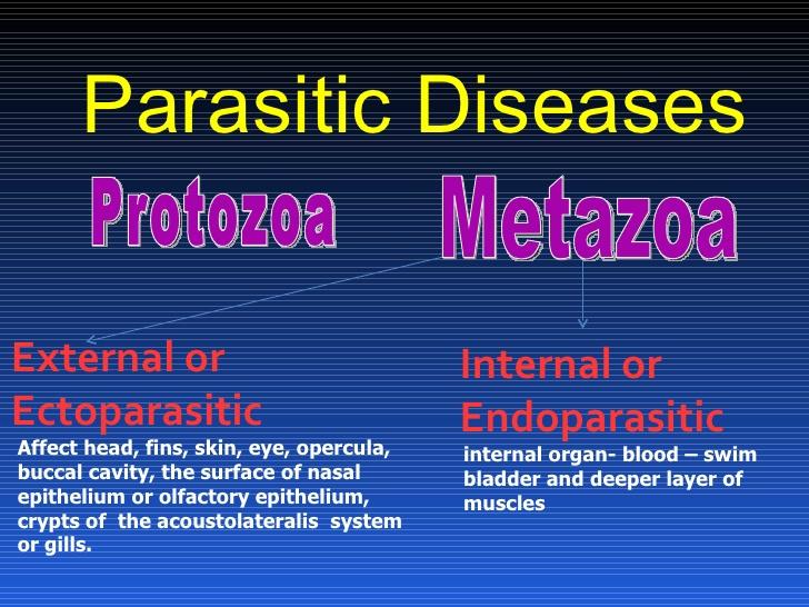 metazoal
