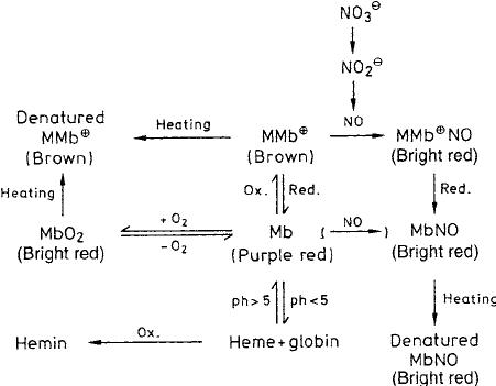 metmyoglobin