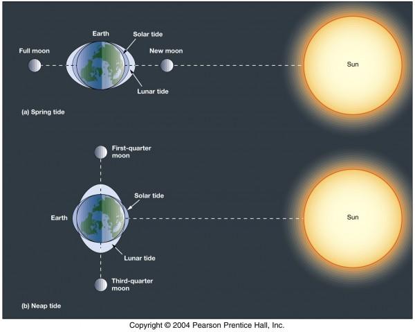 Znalezione obrazy dla zapytania tides moon sun