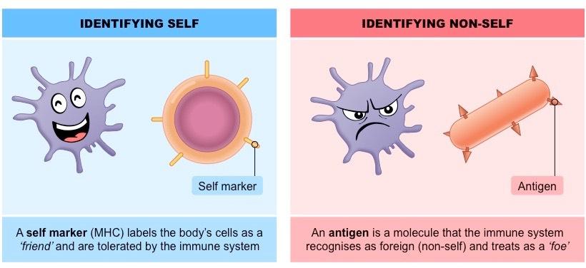 nonself-antigen