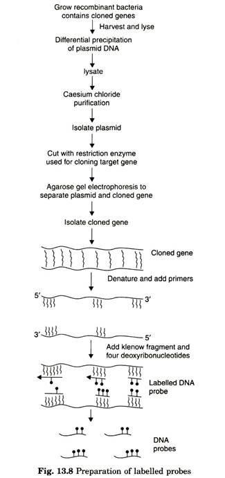 nucleic-acid probe