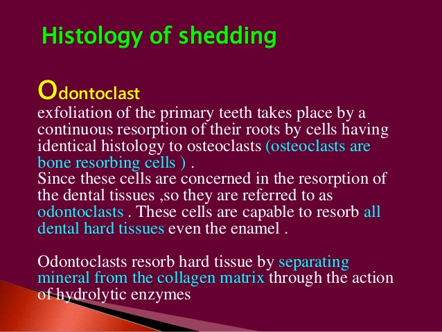 odontoclast