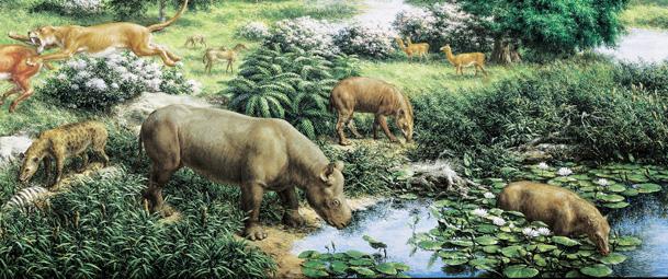 oligocene