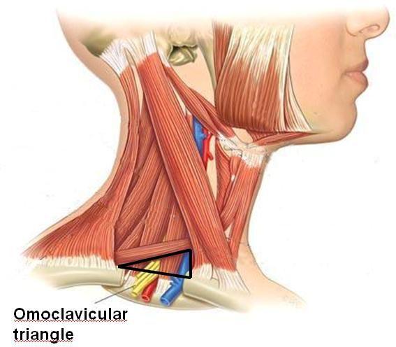 omoclavicular triangle
