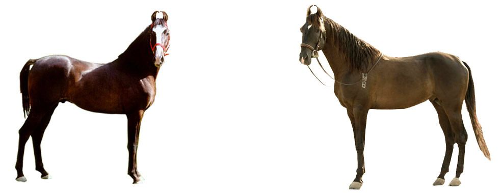 on the right tack