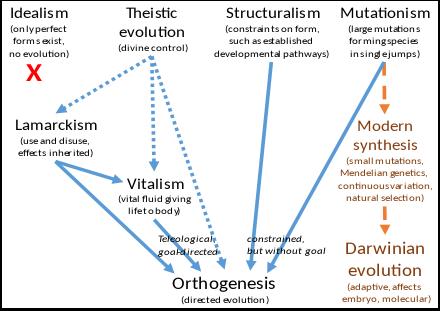 orthogenesis