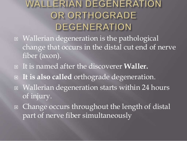 orthograde degeneration