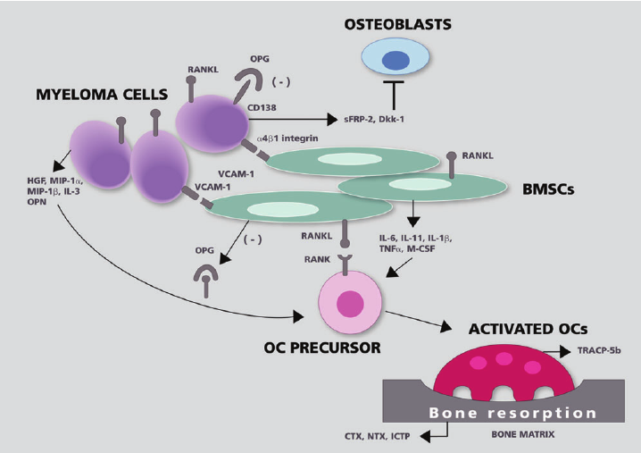 osteoclast-activating factor
