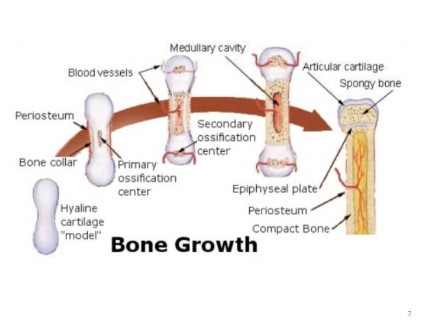 osteogenic