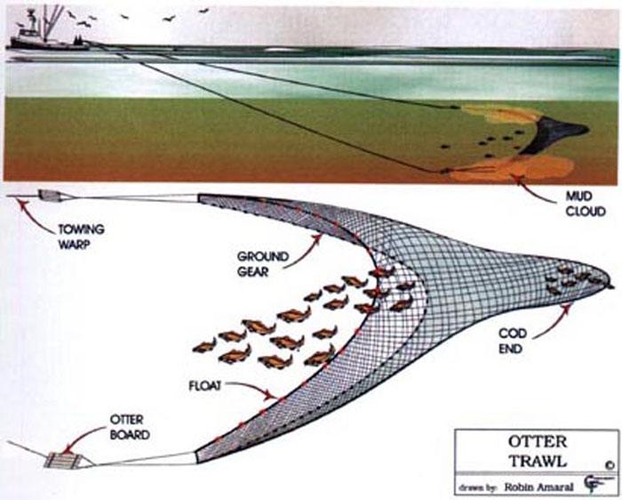otter trawl