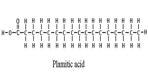 palmitic