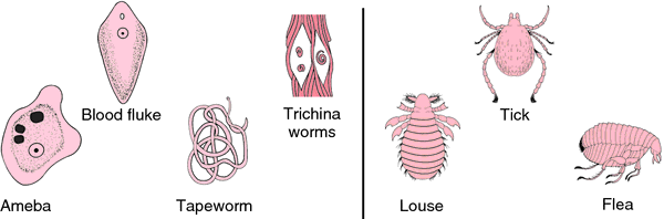 parasitic melanoderma