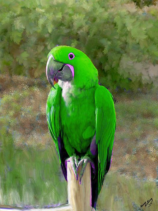 parroquet